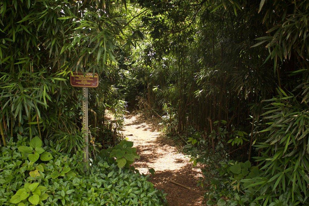 Hike Kamehameha Summer Palace
