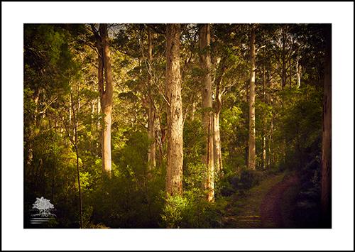 FOREST PATHWAY.jpg