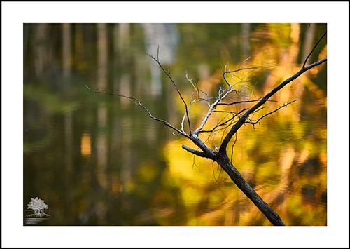 FOREST LAKE.jpg