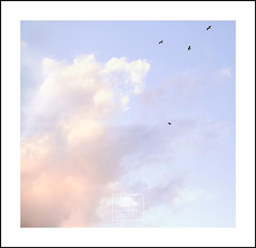 clouds4withebirds copy.jpg