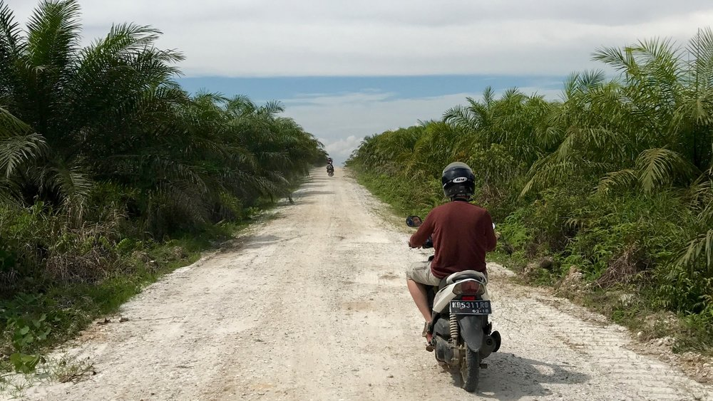 Riding through palm oil plantations, no jungle in sight.
