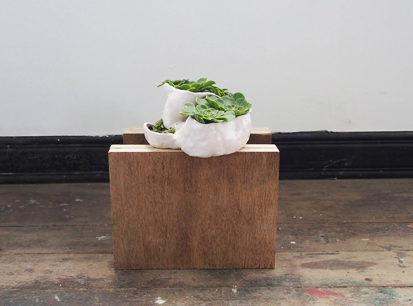 Ceramics on ply with Aeonium Tabuliforme, 2015