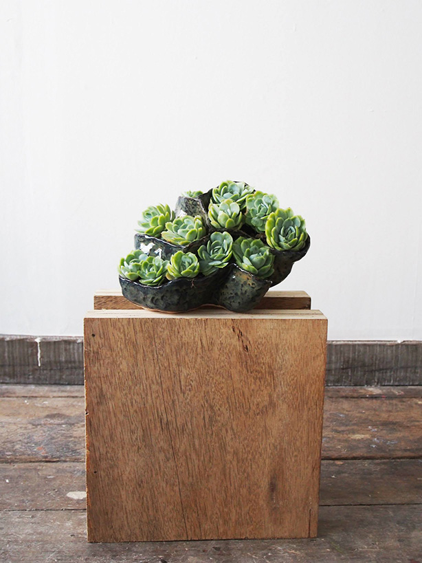 Ceramics on ply with Echeveria Elegans , 2015