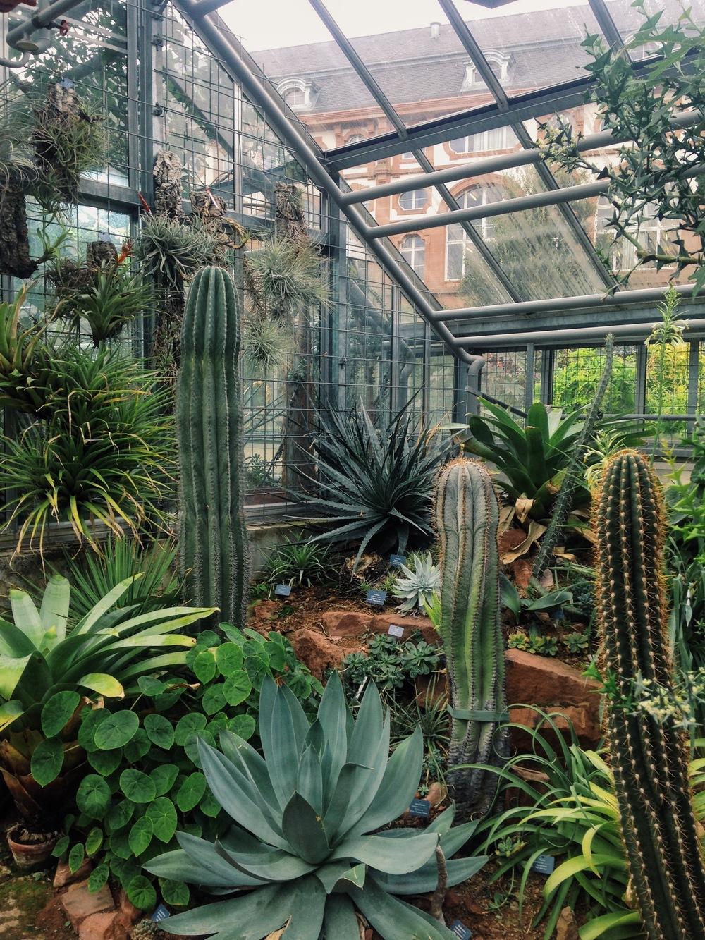 Botanischer Garten der Universität Basel, 2015