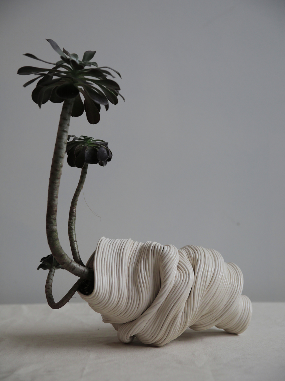 Reclining vessel,  2016  Ceramic with Aeonium Arboreum.