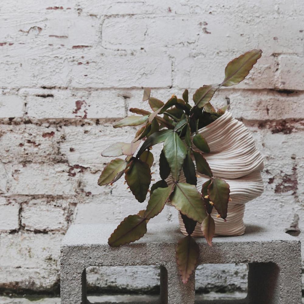 zhu-ohmu-ceramics-rhipsalis-crispata-mistletoe-cactus.png