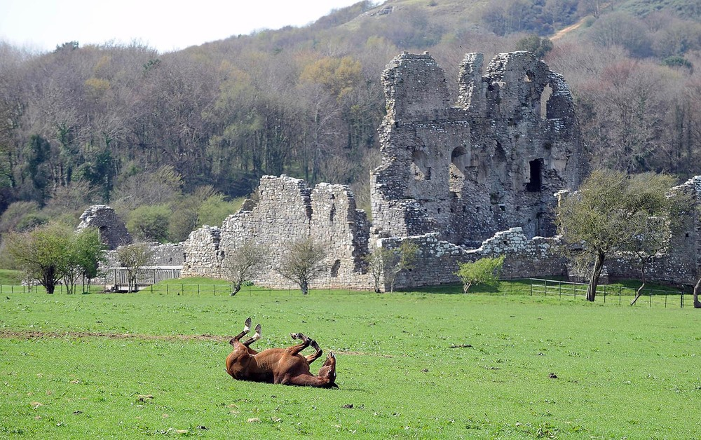 A horse rolls in the grass at Ogmore Castle