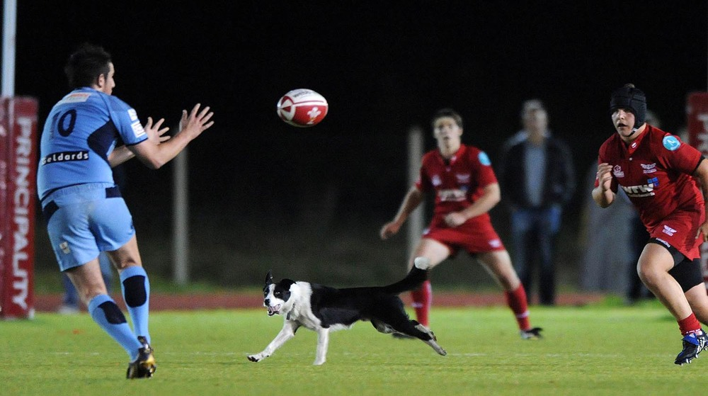 A dog invades the pitch during an U16 match