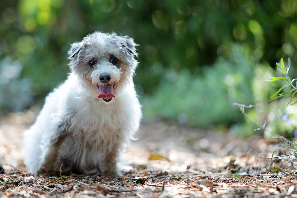 Dogs Trust sponsor dog