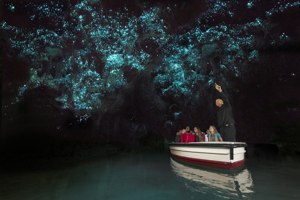 Waitomo Glowworms Tours