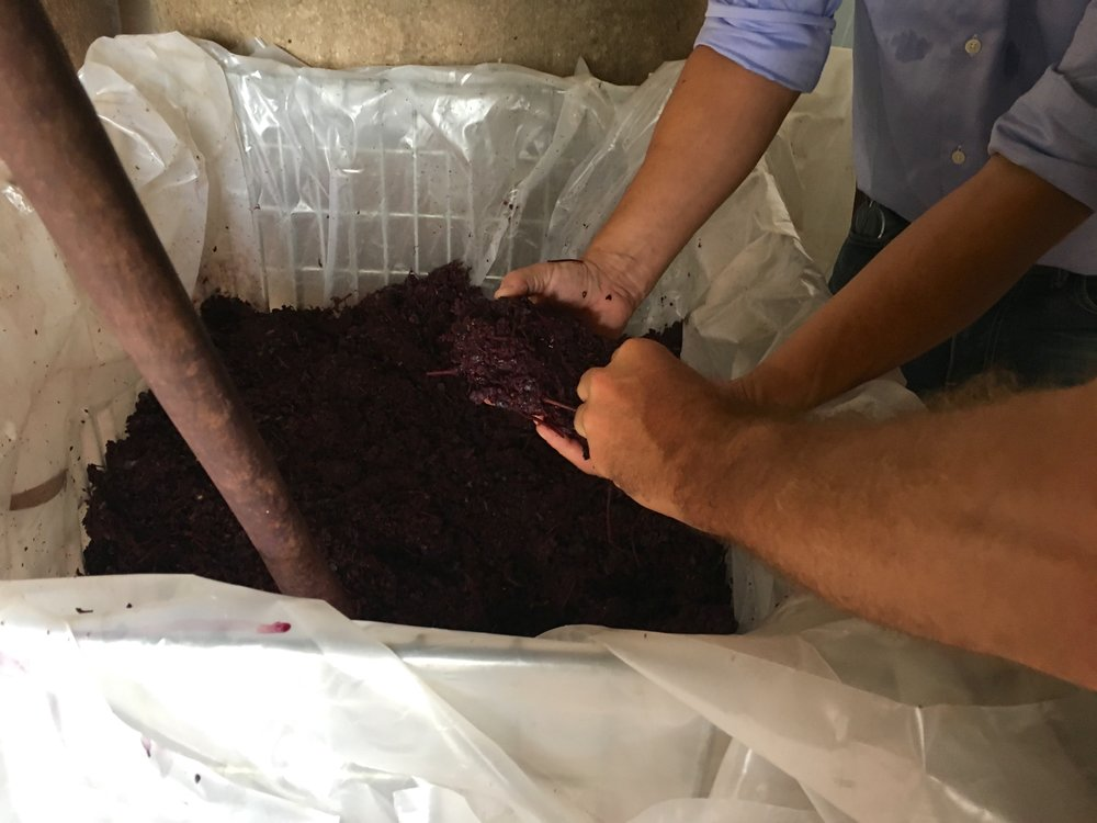 grape skins for brandy
