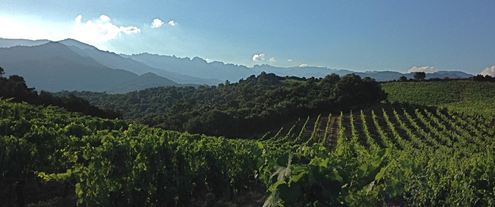 Domaine de Torraccia, Corsica