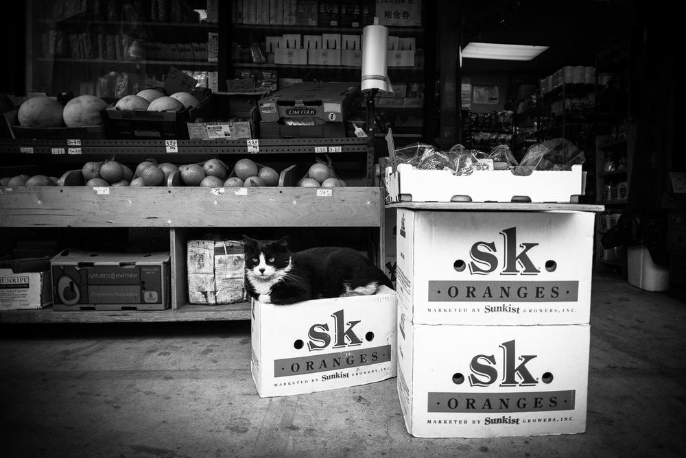 Bodega Cat, New York NY, May 2015