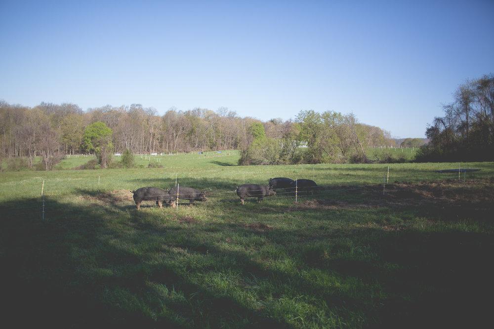 Raised on pasture.