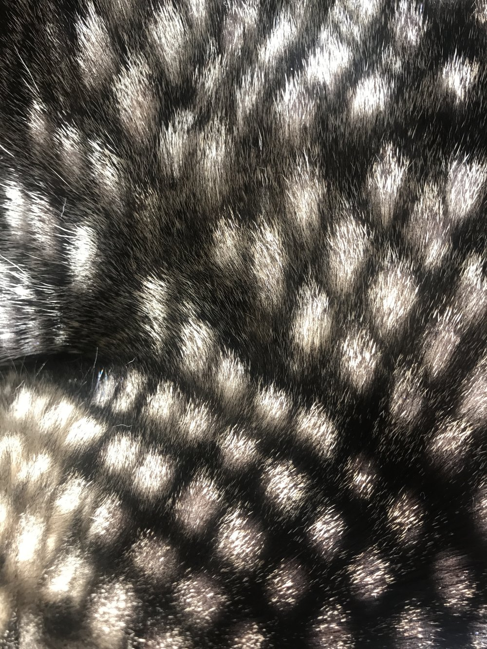 shadow on cat fur