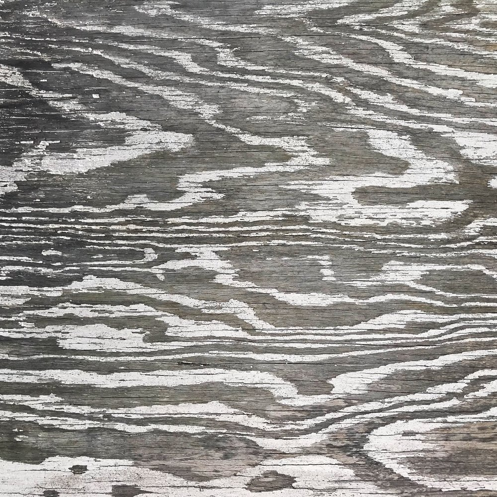 Nature's Rhythms found grown in the grain of wood