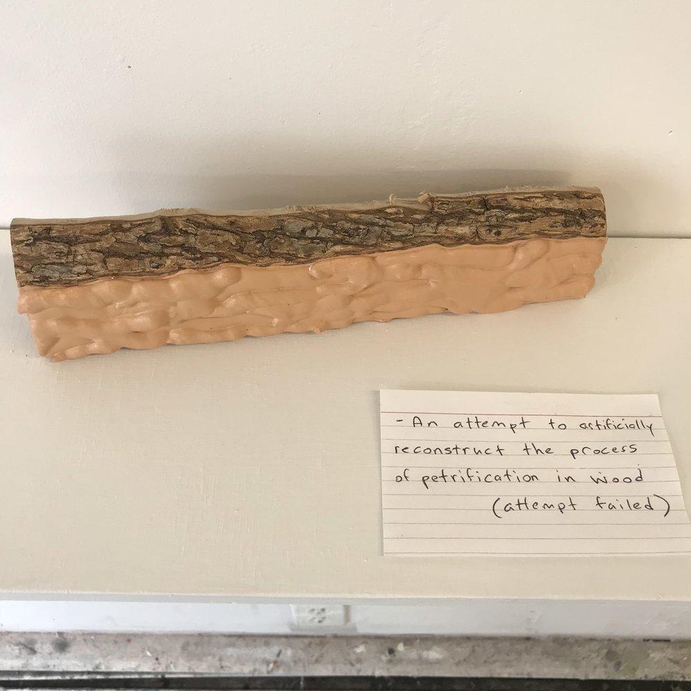 Wood Study - Petrification