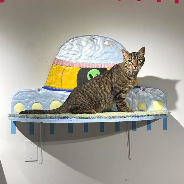 my UFO cat-shelf painting installed in @bamsaskatoon's the Cat's Meow exhibit. 👽😸👽😸👽😸👽😸 Lots of Kitties want to go on an  extra terrestrial voyage! ✨🌔🛸🛸🛸🛸🛸🛸🛸 ($200! 1/2 goes to Street Cat Rescue!!)