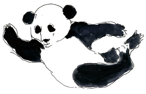 Panda brincando.jpg
