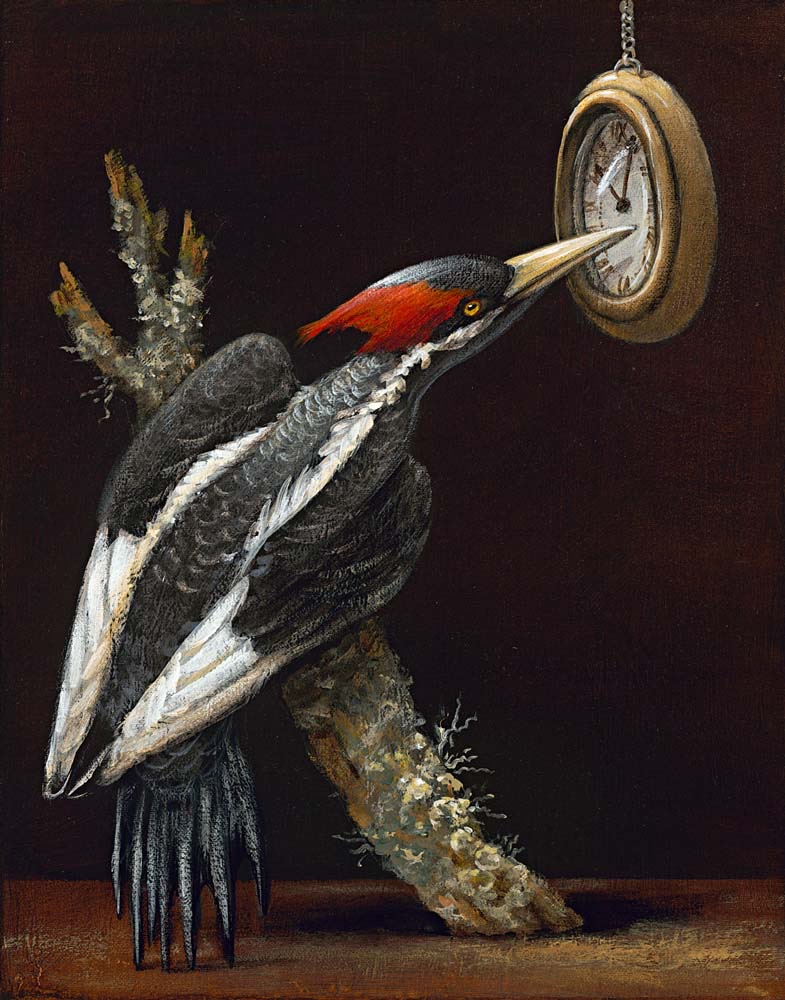 Birds of America: The Ivory Billed Woodpecker