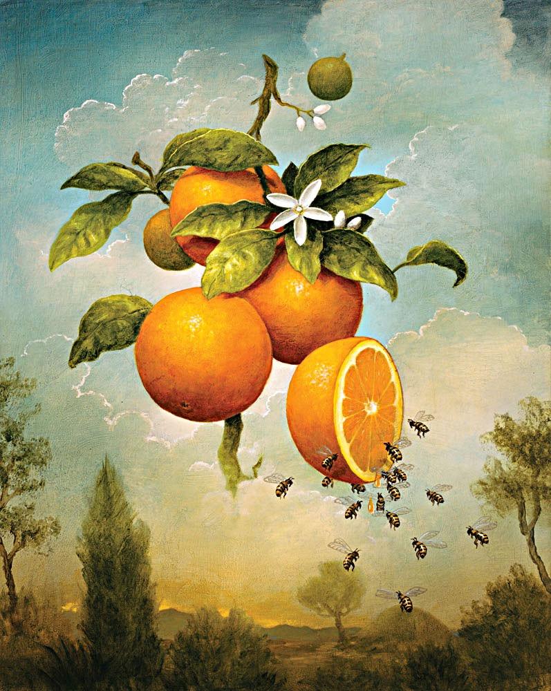 Abundance: Oranges, 2009-2010