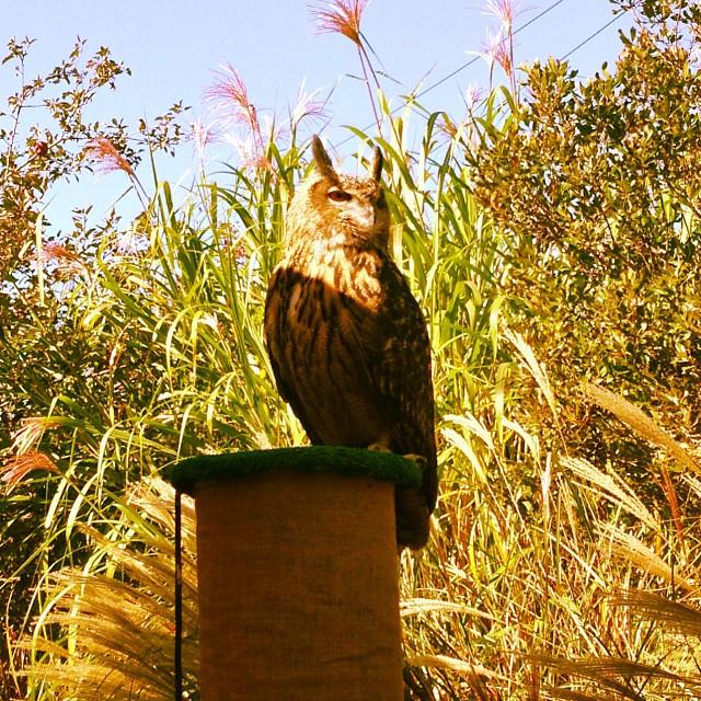 Eagle owl at Hawthorne Valley fall fair.