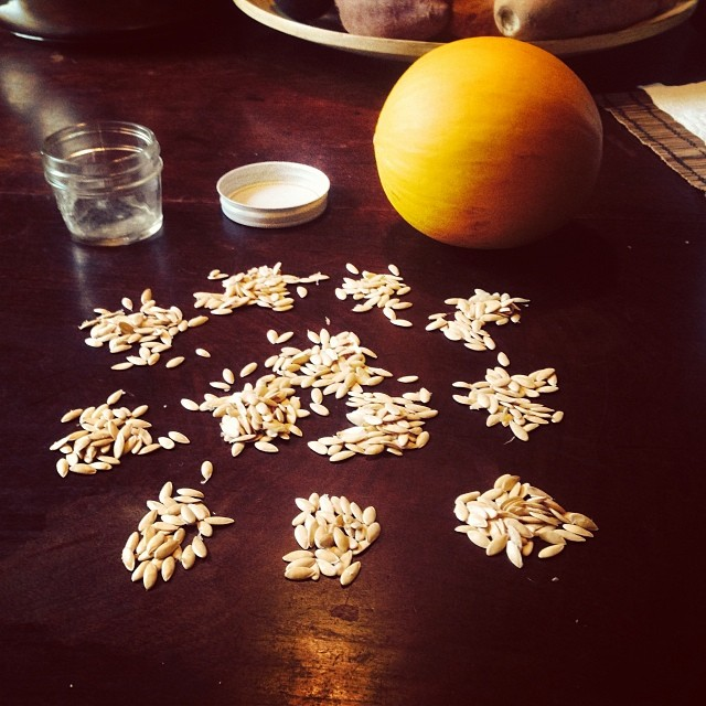 Almost 500 seeds from 1 little Fonzy melon. From Mexico. Wonder if it would grow here with our short growing season. #homestead33