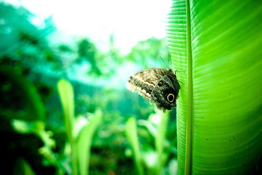 CostaRica2010-10-25_0171