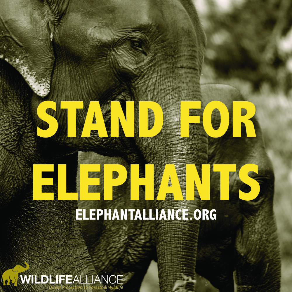 Don't forget to tag us on Instagram @wildlife_alliance!
