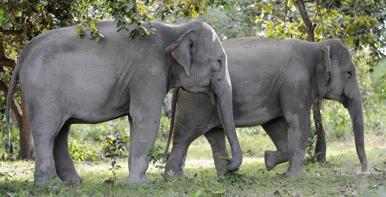elephant alliance