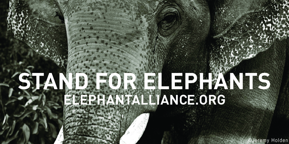 Stand for Elephants.jpg