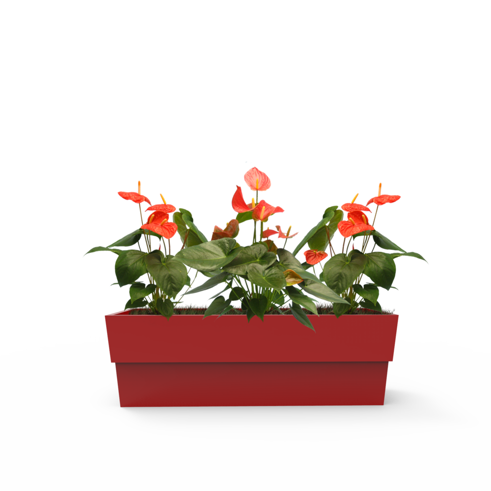 Using a planter for your plants can help improve their lifespan.