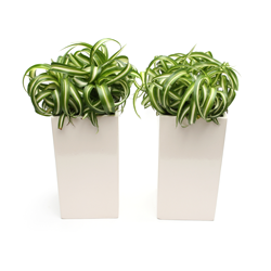 Contemporary Plant Containers.png