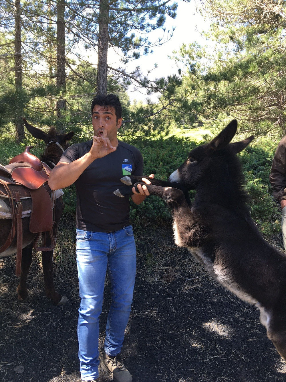 Salvo, Etna Donkey Trekking