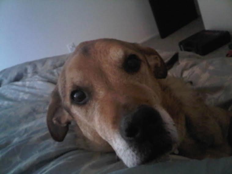 peg mcnichol dog in bed