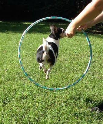 hula hoop2