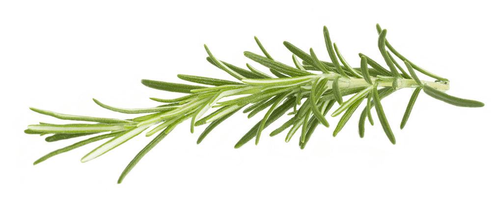 rosemary.png