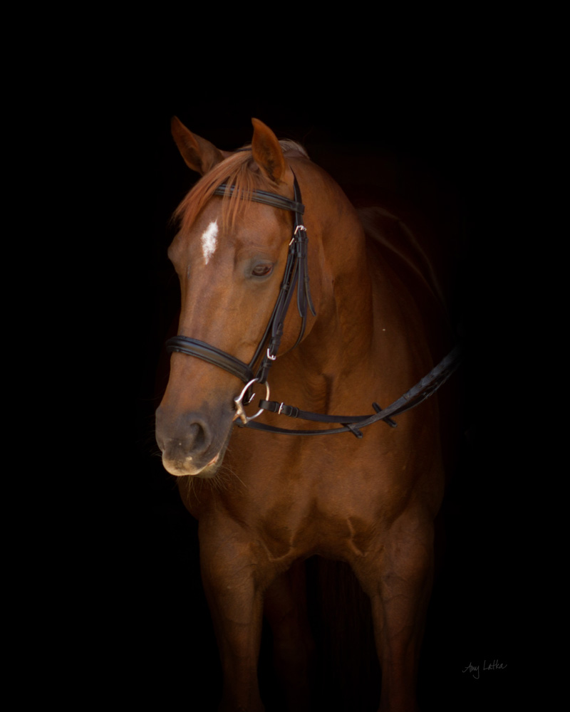 This gorgeous girl is Mo, a registered Quarter Horse mare.  She is owned and loved by Chris.  Mo just looks stunning on a dark backdrop.