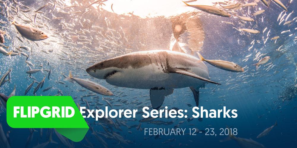 FlipgridExplorerSeries_Sharks_Banner.jpg