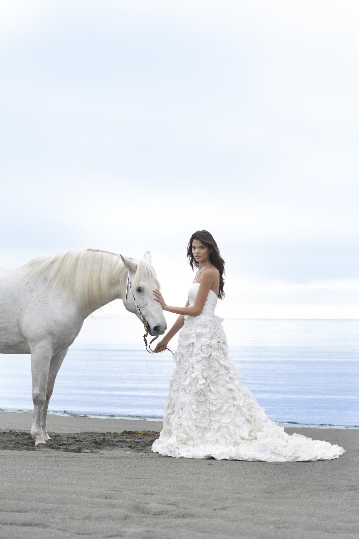 horsebride1.jpg