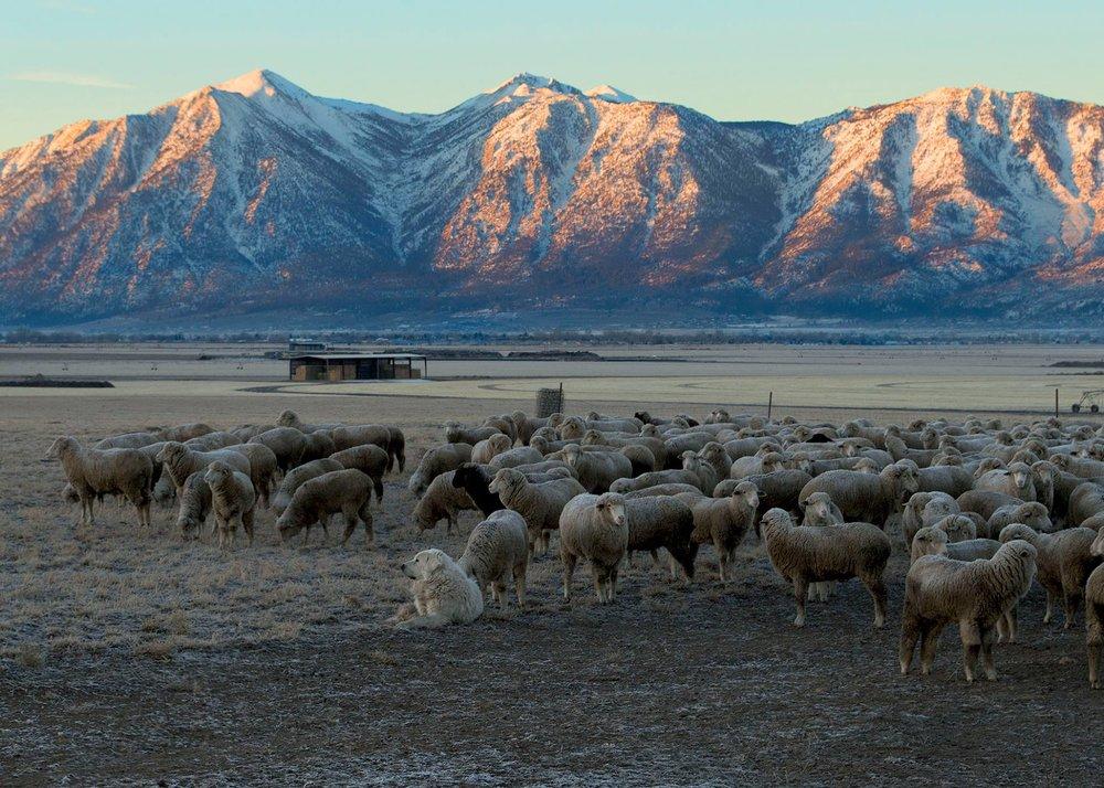 Borda Ranch Morning.jpg