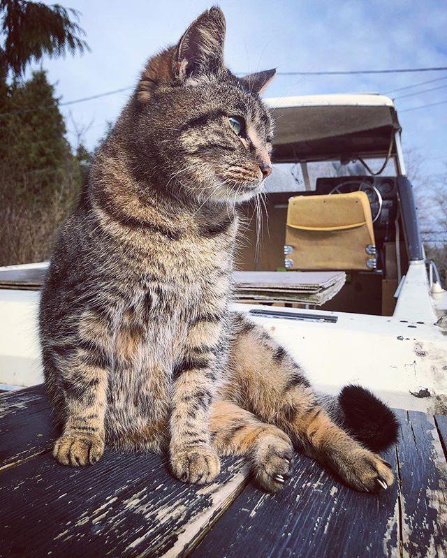 Meow #meow