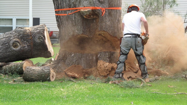 big_tree_cutting.jpg