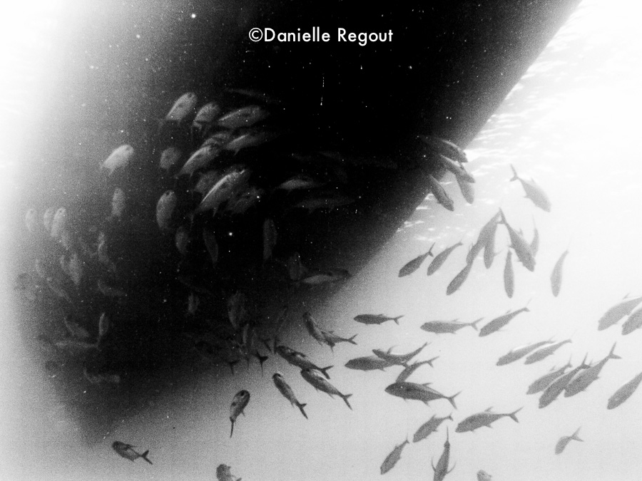 The Giant Squid-2.jpg