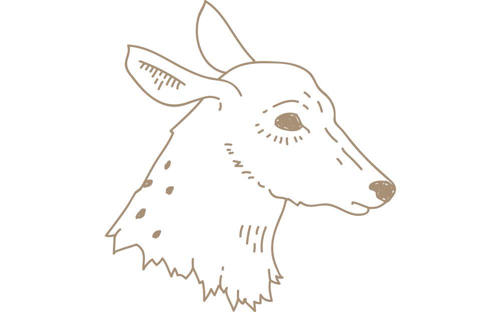 brown-deer-head-blog.png