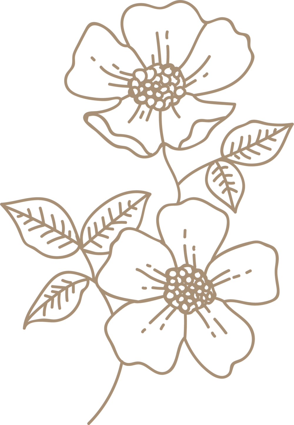 brown-wild-rose.png