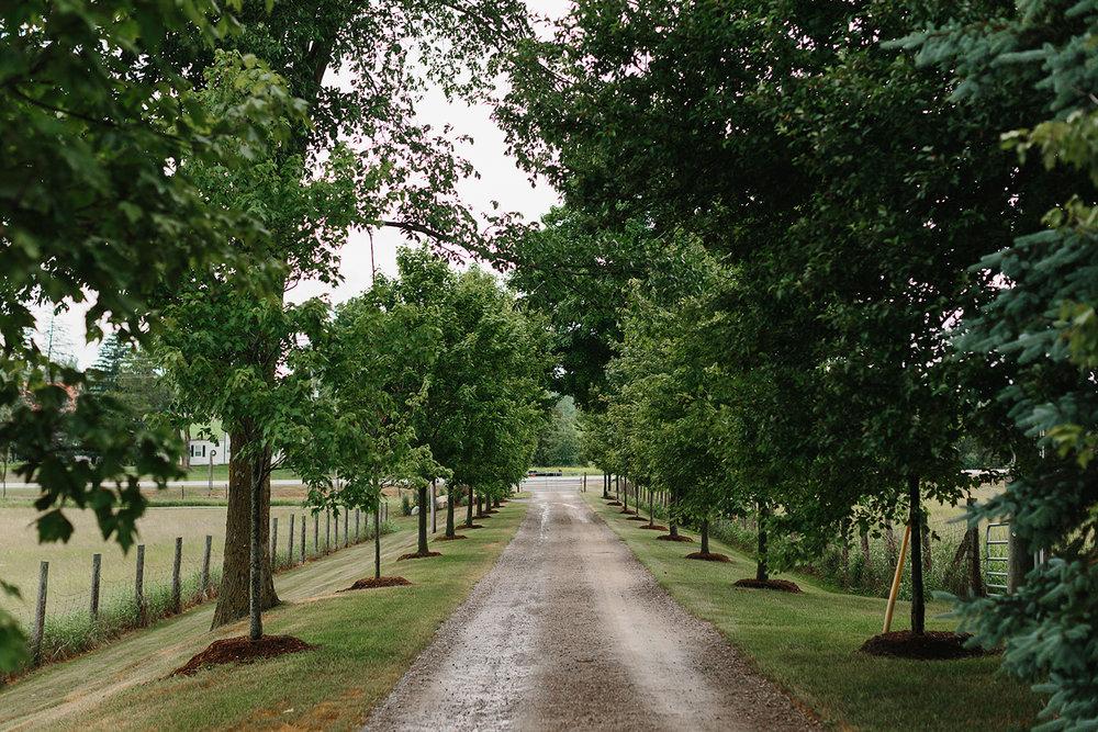 cambium-farms-wedding-toronto-wedding-photographer-ryanne-hollies-photography-gay-wedding-farm-wedding-inspiration-trees-laneway-wedding-day.jpg
