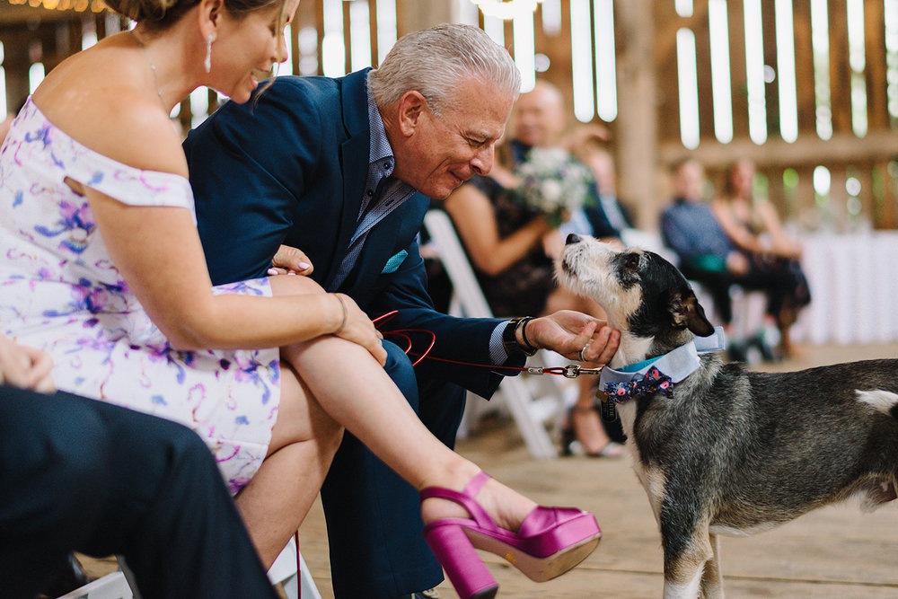cambium-farms-wedding-ryanne-hollies-photography-gay-wedding-lgbtq-trendy-cool-badass-junebug-weddings-inspiration-ceremony-in-old-barn-bertie-the-dog-barking-and-cheering-cute-dadjpg