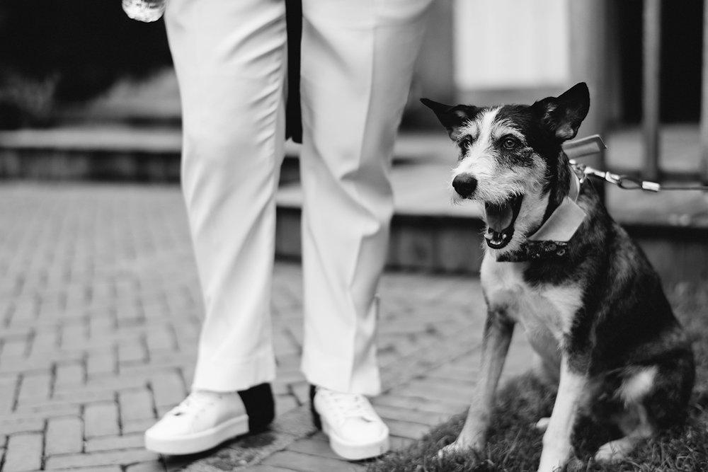 cambium-farms-wedding-ryanne-hollies-photography-gay-wedding-farm-wedding-inspiriration-green-wedding-shoes-couples-portraits-rustic-barn-vintage-trendy-badass-couple-the-wedding-co-ontario-dog-at-the-wedding-bertie.jpg