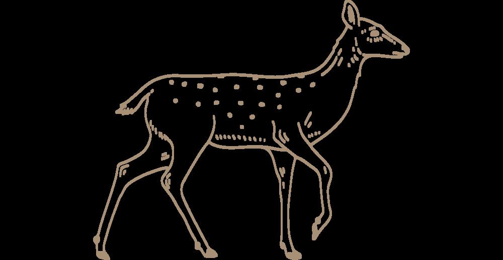 brown-deer-blog.png